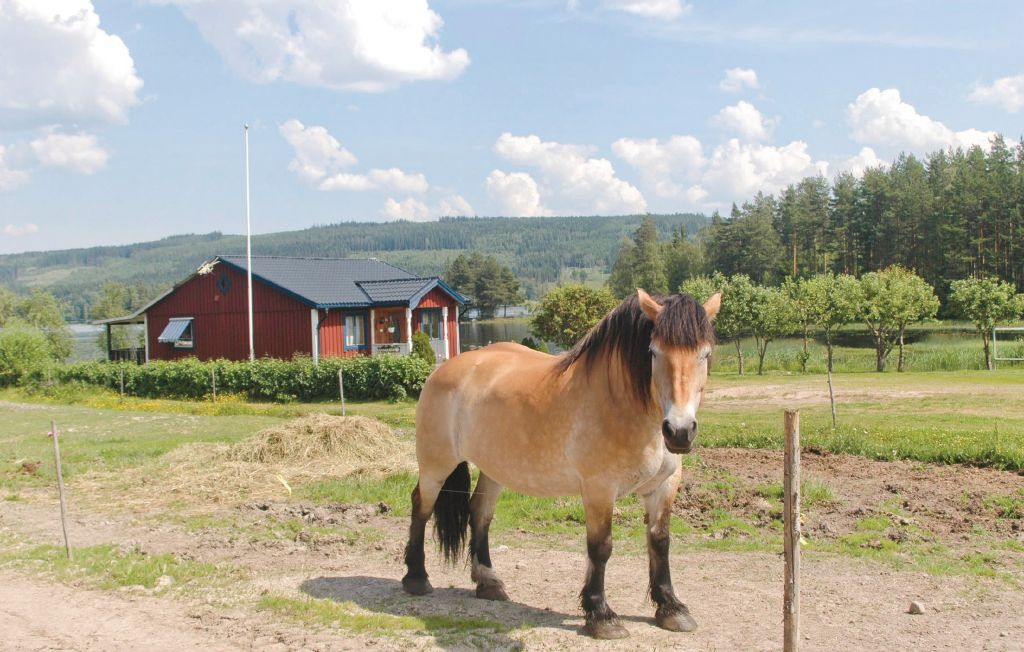 Sommaridyll - Cabins for Rent in Lysvik - Airbnb
